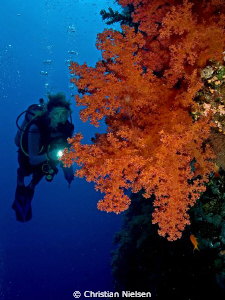 Beautiful soft coral on Big Brother. 